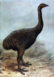 336px-megalapteryx